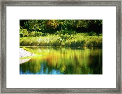 Weeds And Water Framed Print