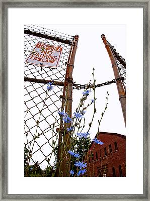 Weeds Framed Print by Andrew Kubica