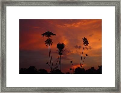 Weeds In The Sunrise Framed Print