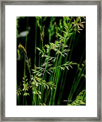 Weeds Framed Print by Mikki Cucuzzo