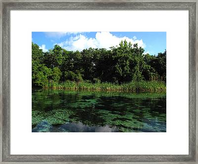 Framed Print featuring the photograph Weeki Wachee River by Barbara Bowen
