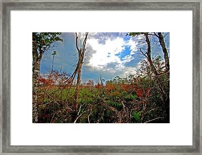 Weeks Bay Swamp Framed Print by Michael Thomas