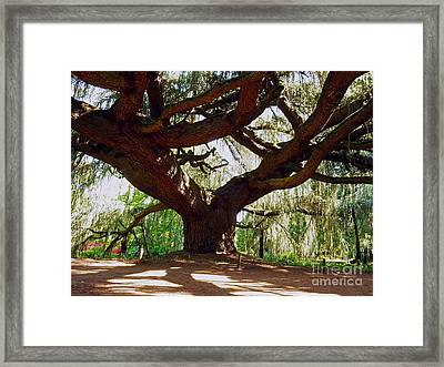 Weeping Blue Atlas Cedar Framed Print by Alex Cassels