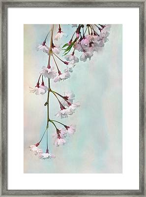 Weeping Cherry Framed Print by Lori Deiter