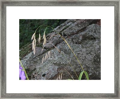 Weeping Grass Framed Print