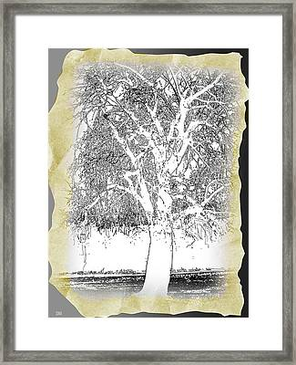 Weeping Willow Designer Framed Print