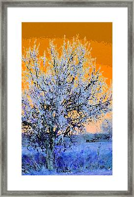 Weeping Willow In November Framed Print