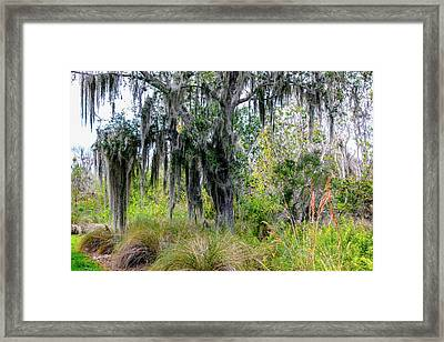 Framed Print featuring the photograph Weeping Willow by Madeline Ellis