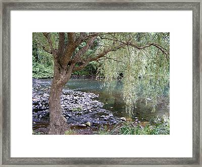 Weeping Willow Framed Print by Margie Avellino
