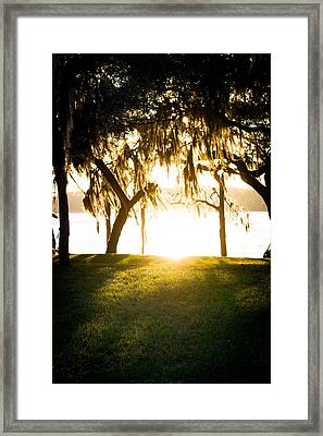Spanish Moss At Sunset Framed Print by Shelby Young