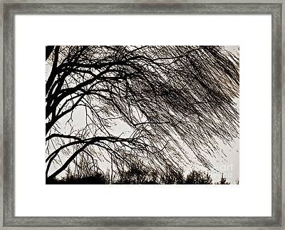 Weeping Willow Tree  Framed Print by Carol F Austin