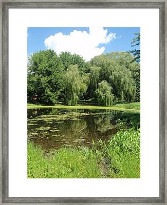 Framed Print featuring the photograph Weeping Willows Pere Marquette by Beth Akerman