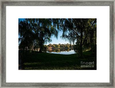 Weeping Willows Framed Print