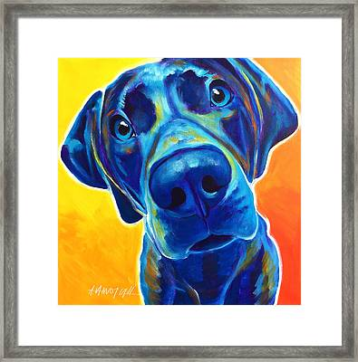 Weimaraner - Bentley Framed Print by Alicia VanNoy Call