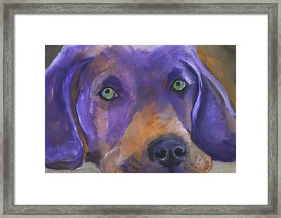 Weimaraner Dog Art Framed Print