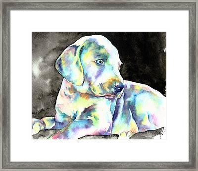 Weimeraner Puppy Framed Print