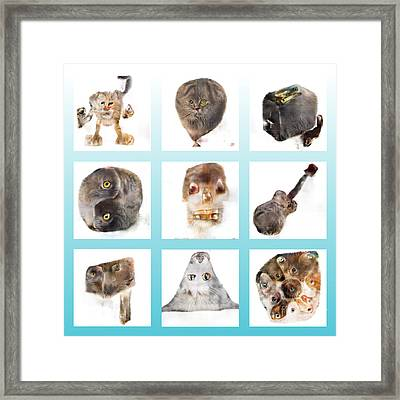 Weird Cats In White Squares On Teal Framed Print by Jason Freedman
