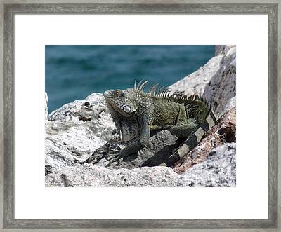 Welcome To Curacao Framed Print