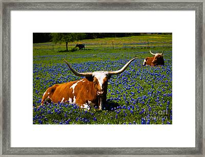 Welcome To Texas Framed Print by John Stanisich