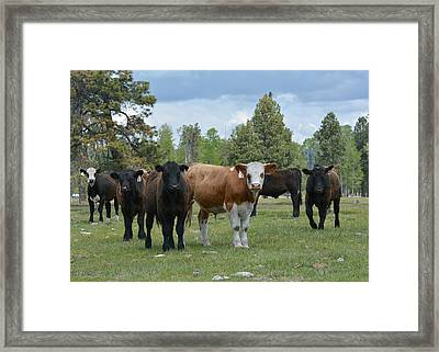 Welcoming Committee 2 Framed Print by Fraida Gutovich