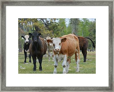 Welcoming Committee Framed Print by Fraida Gutovich
