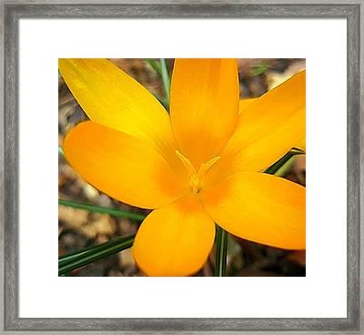 Welcoming Spring Framed Print by Beth Akerman