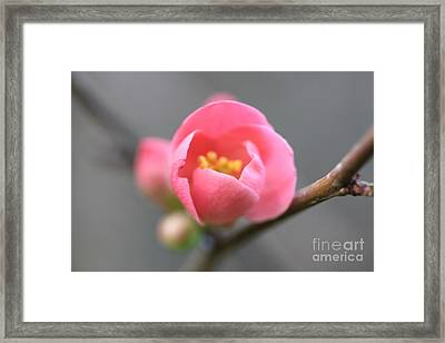 Framed Print featuring the photograph Welcoming by Stephen Mitchell
