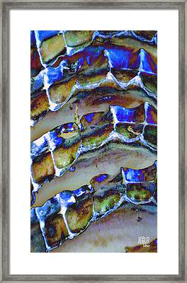 Welk Shell Framed Print by Michele Caporaso