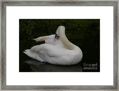 Well-groomed Framed Print by Catja Pafort