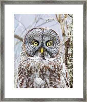 Well Hello - Great Gray Owl Framed Print by Lloyd Alexander