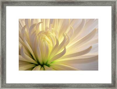 Well Lit Mum Framed Print