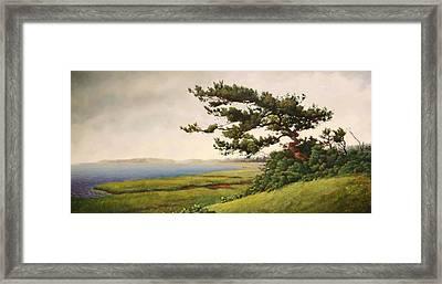 Wellfleet Saltmarsh Framed Print by Stephen Bluto