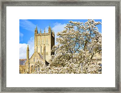 Wells Cathedral And Spring Blossom Framed Print by Colin Rayner