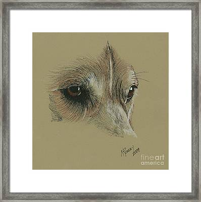 Welsh Corgi Eyes Framed Print by Norma Rowley