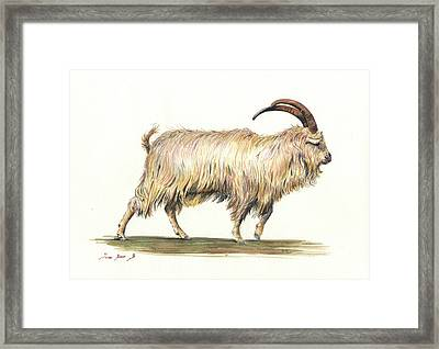 Welsh Long Hair Mountain Goat Framed Print