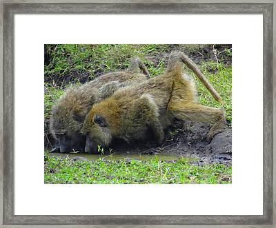 We're A Pair Of Baboons Framed Print
