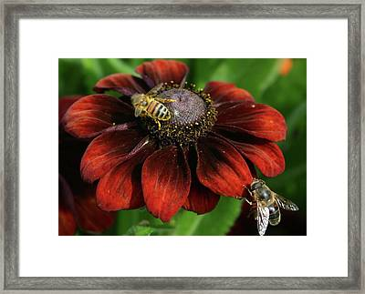 We're Busy Framed Print by Martina Fagan