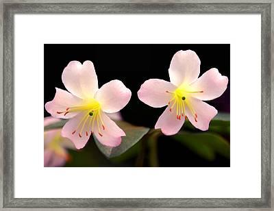We're In Full Bloom Framed Print by Debra Orlean