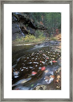 West Fork Oak Creek And Fall Color Framed Print by Rich Reid
