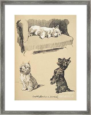 West Highlanders And Scotch Framed Print
