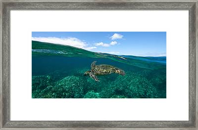 West Maui Green Sea Turtle Framed Print