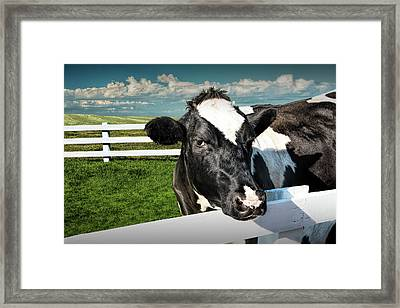 West Michigan Dairy Cow Framed Print by Randall Nyhof