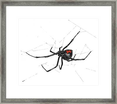 Western Black Widow - Color Framed Print