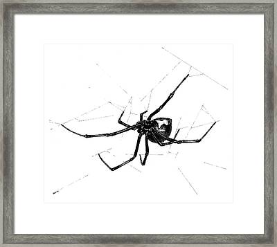 Western Black Widow Framed Print