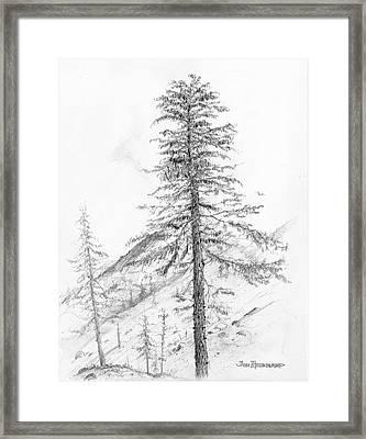 Western Hemlock Framed Print by Jim Hubbard