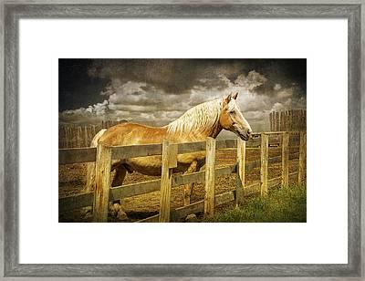 Western Horse In Alberta Canada Framed Print