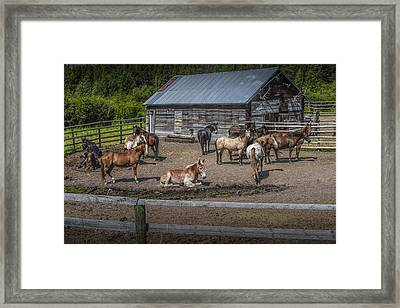 Western Horses At An Outfitters Corral Framed Print by Randall Nyhof