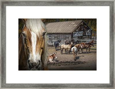 Western Horses In An Outfitters Corral Framed Print