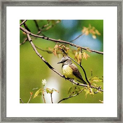Western Kingbird - Artistic Framed Print