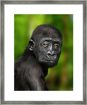Western Lowland Gorilla Baby Framed Print by Julie L Hoddinott